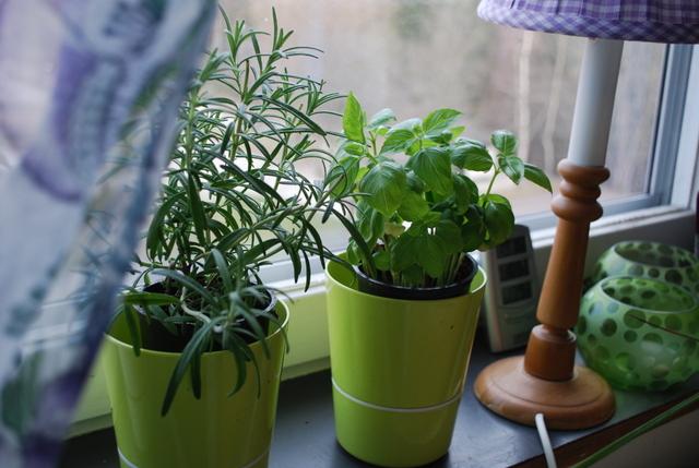 Kryddväxter i köksfönstret